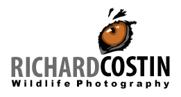 Wildlife Photographer – Richard Costin