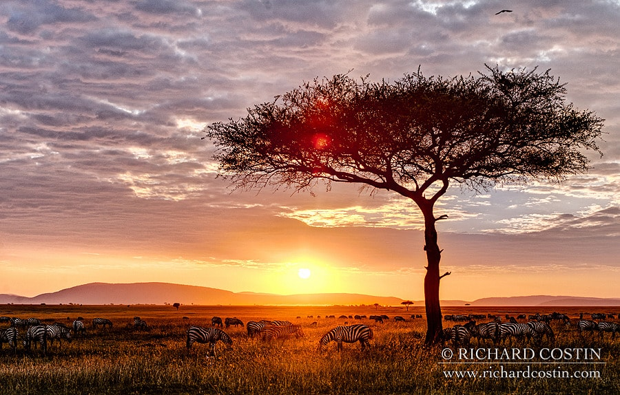 African landscape shot. Taken in one of the conservancies in the Masai Mara, Africa.