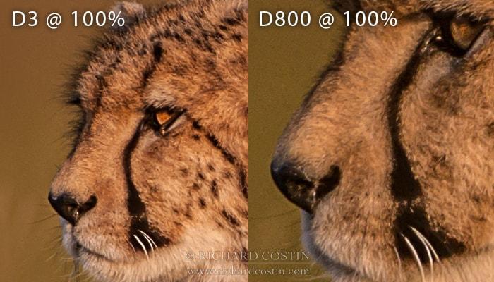 Nikon D3 and D800 100% crop comparison