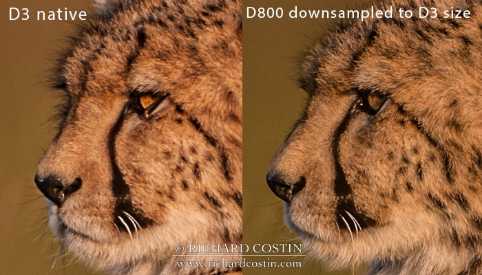 Nikon D3 and D800 resolution comparison (D800 downsampled)