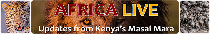 Africa live photography blog