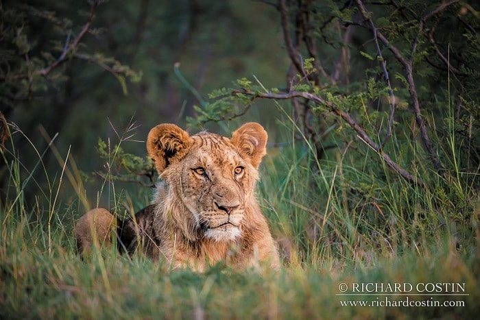 RichCostin_AfricaLiveBlog_2014a_10___0004