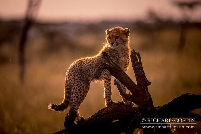 RichCostin_AfricaLiveBlog_2014a_10___0011