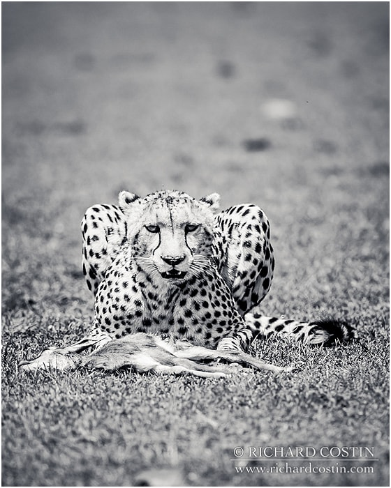 RichCostin_AfricaLiveBlog_2014b_03___0027