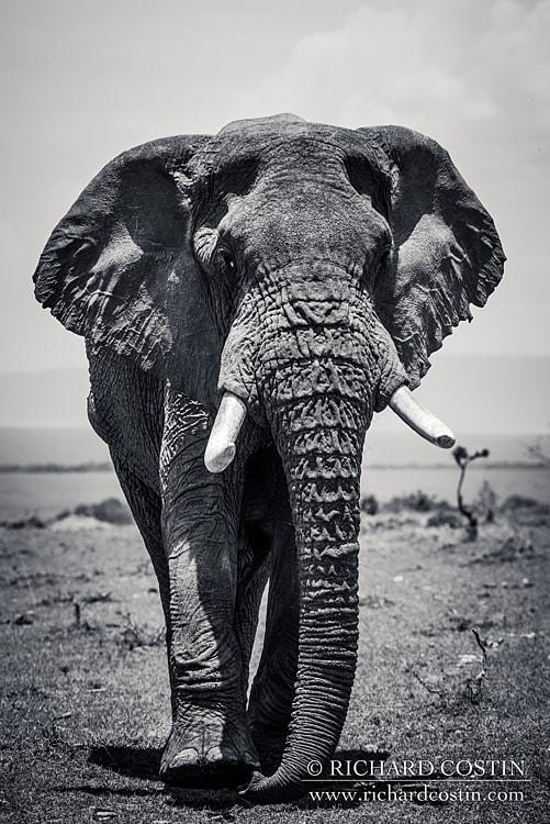 RichCostin_AfricaLiveBlog_2014b_04___0014