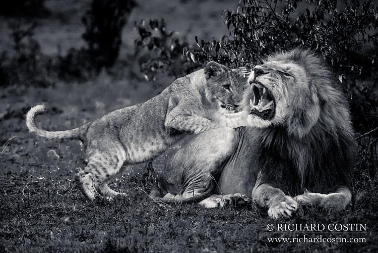 RichCostin_AfricaLiveBlog_2014b_04___0032