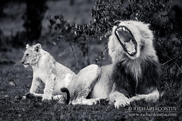 RichCostin_AfricaLiveBlog_2014b_04___0034