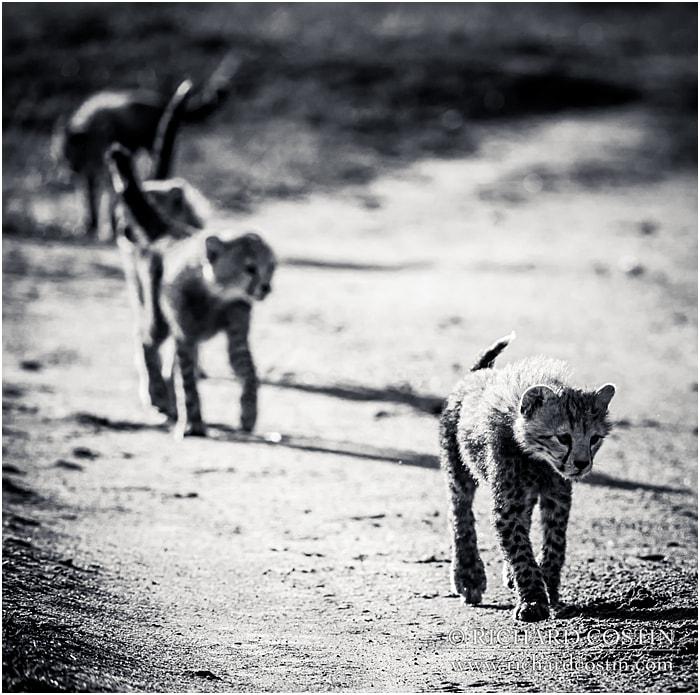 RichCostin_AfricaLiveBlog_2014b_05___0025