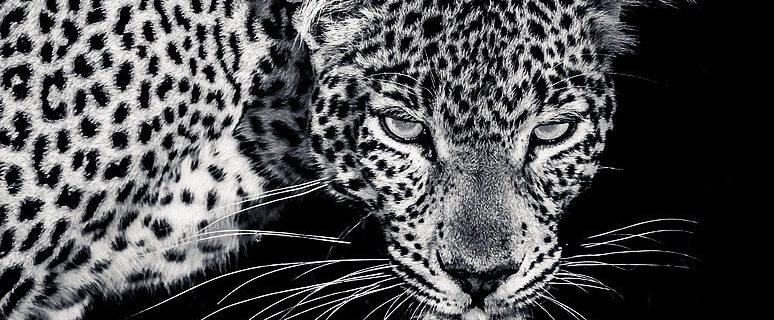 Africa Live 2016-02: 03 part 2, Glorious light