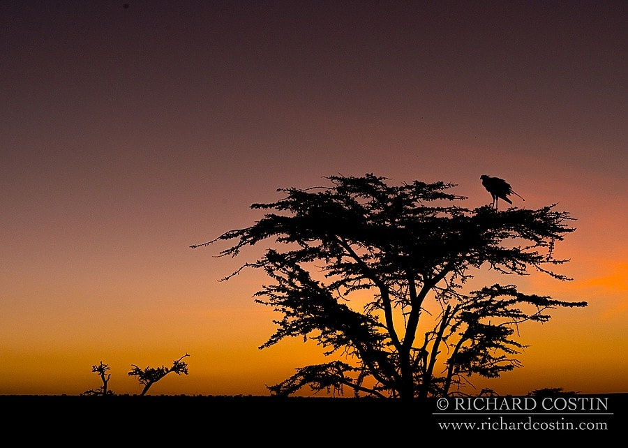 Richardostin_AfricaLive_05a_002