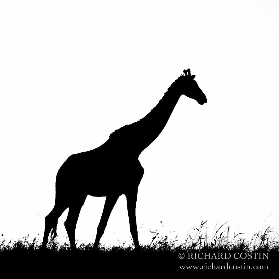 Richardostin_AfricaLive_05a_010