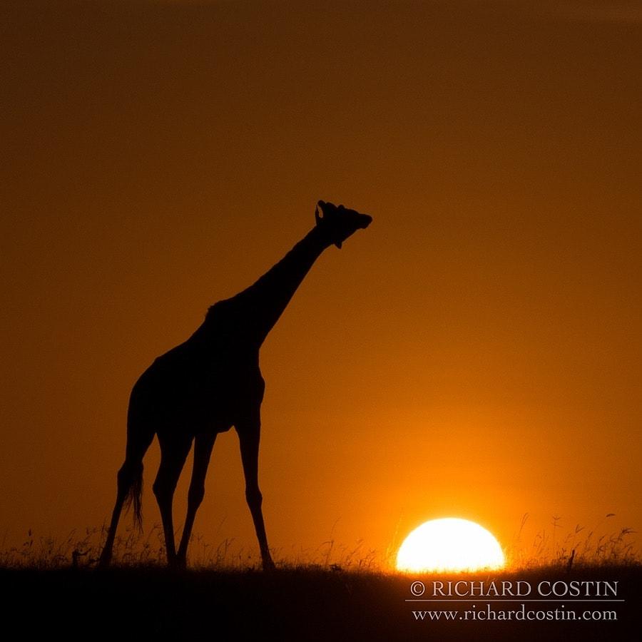 Richardostin_AfricaLive_05a_014