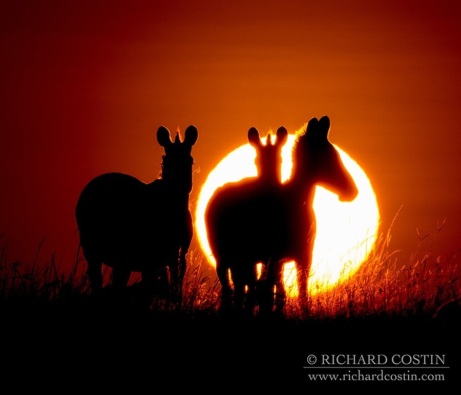 Richardostin_AfricaLive_05a_017