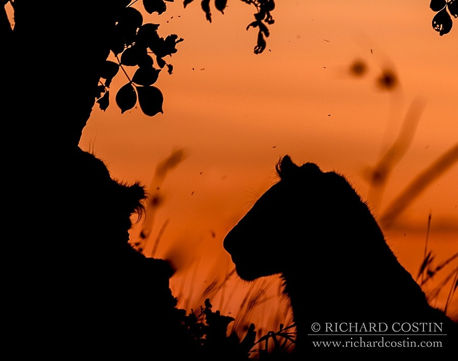 Richardostin_AfricaLive_05c_002