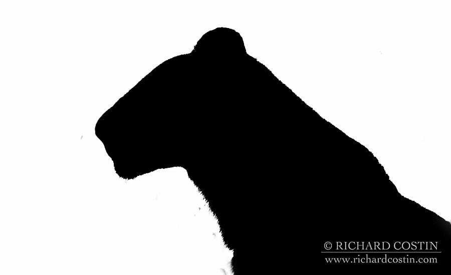 Richardostin_AfricaLive_05c_004