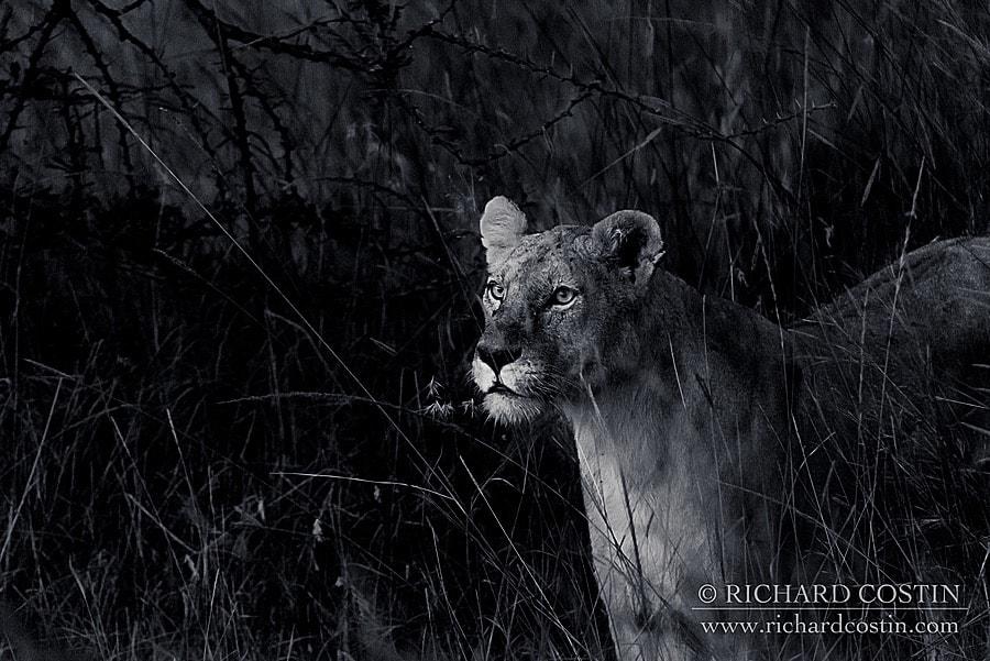 Richardostin_AfricaLive_05c_007