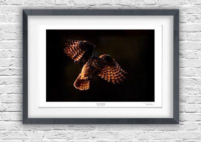 framed fine art works by wildlife photographer richard costin