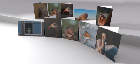 Best of British Greeting cards 10 pack.